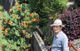 オレンジ色の花を咲かせた平尾さん方のサボテン=波佐見町宿郷