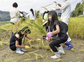 支援米を収穫する参加者