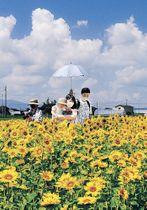 夏の日差しに映える満開のヒマワリに見入る親子=富山市新保