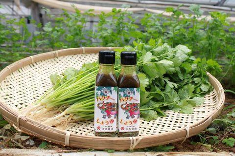 パクチー香るしょうゆ誕生 山武・大高醤油が開発 万能調味料、CFで先行販売