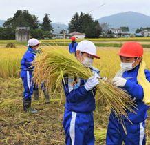 真剣な表情で刈り取った稲を束にまとめる不動小児童