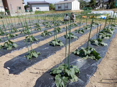 約60種類の野菜を出荷 地域農業の新たな柱に