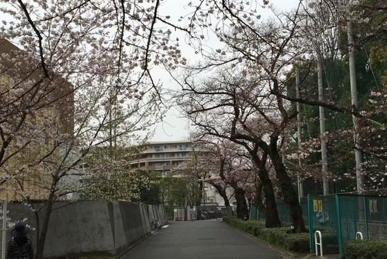 東京・桜上水にある日大アメリカンフットボール部練習場