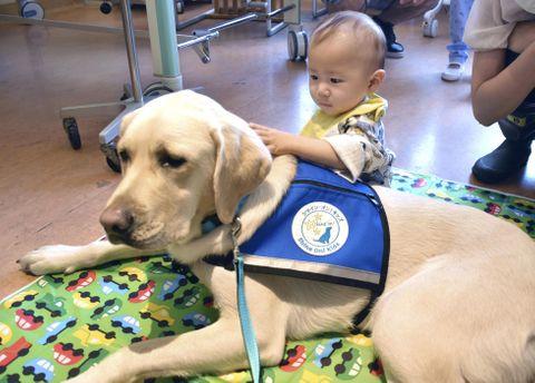 病気の子、犬が支える 検査や手術に付き添い ファシリティードッグ