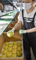 鳥取県米子市の選果場で箱詰めされる「夏さやか」=26日午前
